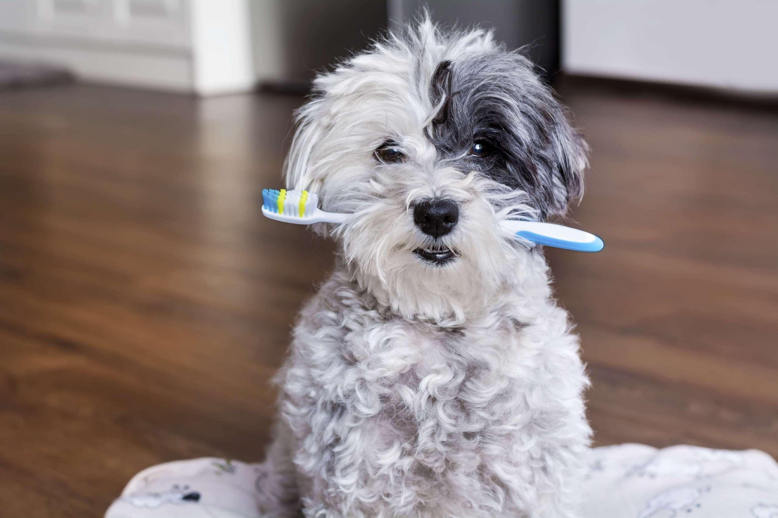 Porter le masque comme se brosser les dents!